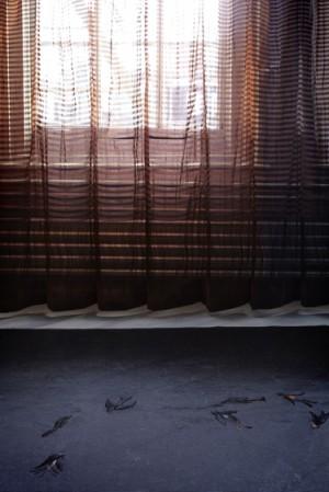 curtain&candelaria